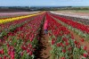 I was told about the amazing tulip farm on Table Cape in Northern Tasmania so I just had to go and see it for myself. ...