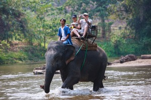 Questions about the ethics of elephant safaris are increasing.