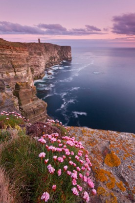 Marwick Head cliffs in spring.