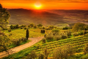 Tuscany's picturesque vineyards.
