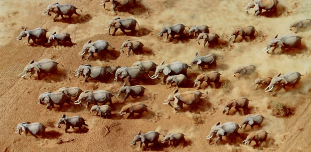Elephants are native to Africa south of the Sahara.