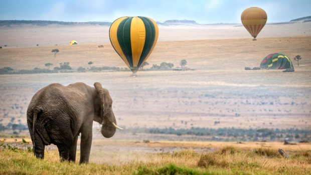Hot air balloons land in the Masai Mara National Reserve, Kenya.