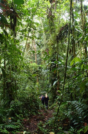 Guided hikes at Mashpi Lodge take you through thick cloud forest.