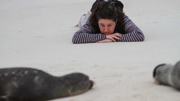 Meet wildlife in the Galapagos with Curious Traveller tours.