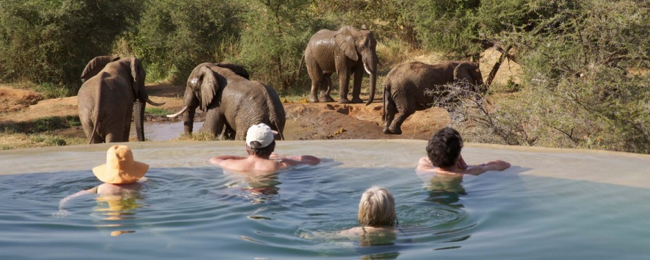 Sarara camp's pool overlooks a watering hole.