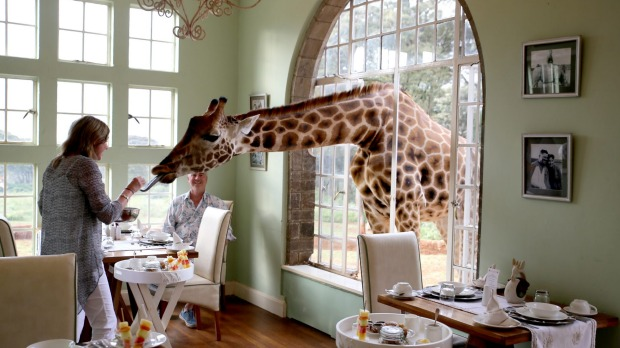 Meet the residents for breakfast at Giraffe Manor.