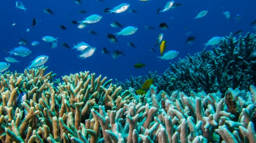 Fish life and coral on Flynn Reef off the coast of Cairns.