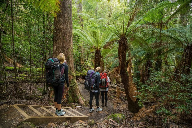 The new Three Capes Walk in Tasmania is a walk of contrasts, from oceanside cliffs to wildflower plains to rainforest ...