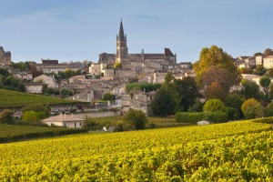 Ripe black grapes in vineyard and the town of St Emilion.