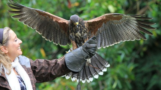 'Hawk walks' are possible in the castle's woodlands.
