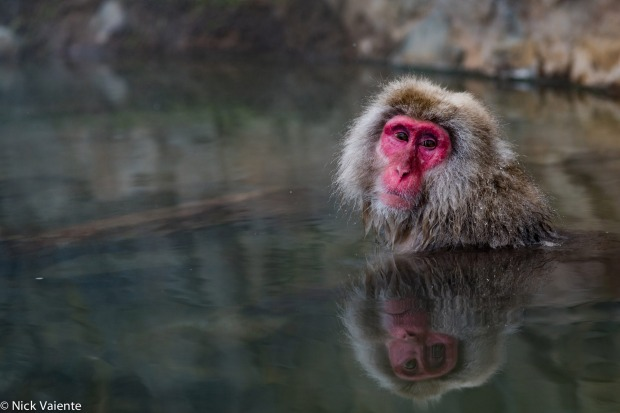 This image was taken at the Jigokudani Monkey Park just outside Nagano. On the other side of the hot spring there were ...