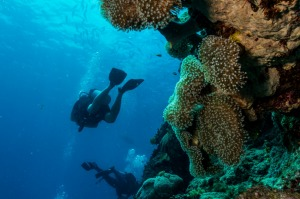 Port Douglas is a good base for trips to the outer reef and the coral islands in between.