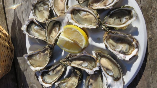 Oysters from Arcachon Bay on the Atlantic coast.