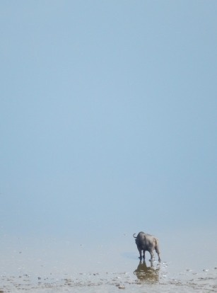 Bunyampaka Salt Lake. Queen Elizabeth National Park. Uganda. Animals such as water buffalo come to heal wounds at the ...
