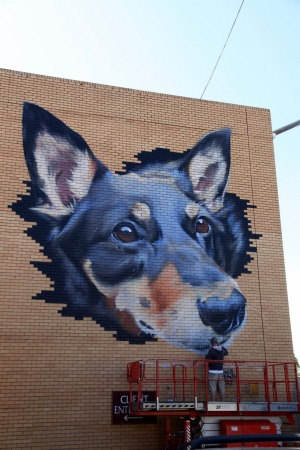 Sirum's near-completed kelpie cross dog.