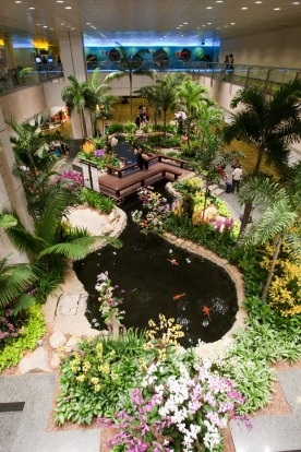 Orchid garden in Changi Airport, Singapore.