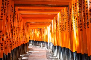 Radiant: The corridor of vermillion torii gates winding up Mount Inari.
