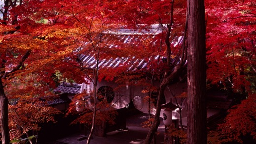 Maple leaves cloak the Komyo ji temple.