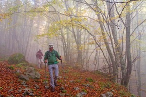 Hiking through mist in the beech forests of Pollino National Park.