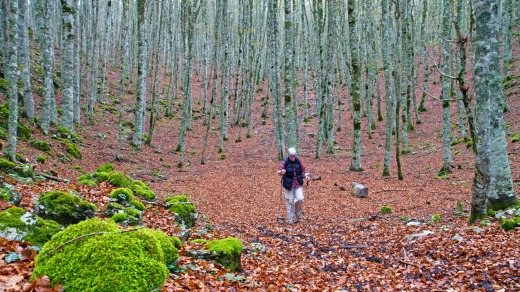 Hiking through autumnal beech forest on the Pollino massif.