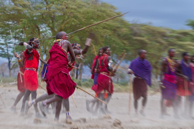 Maasai warriorsstand in line for spear throwing competition.