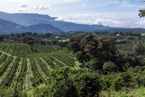 Coffee heaven: Hotel Finca Lerida coffee plantation and boutique hotel in Boquete, Panama.