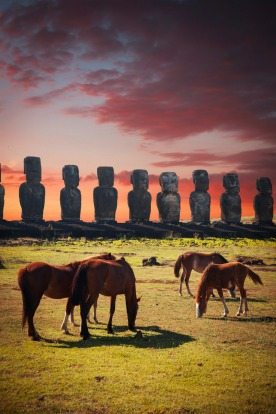 Horses on Easter Island at sunset.
