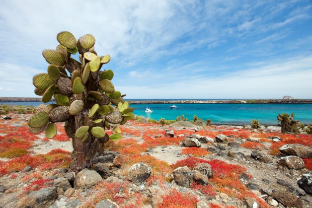 Beautiful landscape of Galapagos South Plaza island.