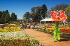 Canberra, Australia - October 1, 2014: A stilt walker dressed as a flower walks around flowerbeds at the Floriade ...