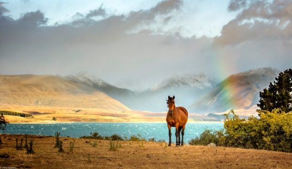 THE WINNER: Amazing blue colours await at Lake Tekapo in New Zealand as a result of all of the mineral deposits.  Add to ...