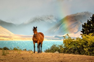Amazing blue colours await at Lake Tekapo in New Zealand as a result of all of the mineral deposits.  Add to this an ...