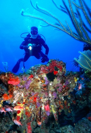 Vieques has many diving-and-snorkelling-friendly coral reefs.