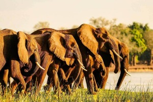 Royal-Zambezi-Lodge-Elephants- Adventure World tra17-deals