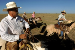 Rancher Duke Phillips, left and Western painter Duke Beardsley, right, ride together for the last round up of cattle for ...