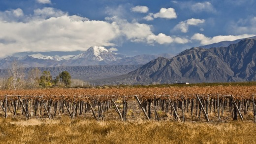 Aconcagua and Grape vines at a vineyard, Argentina.