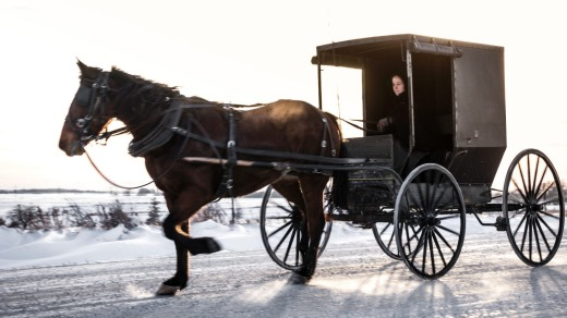 An Amish woman drives her horse-drawn buggy on snowy rural road.