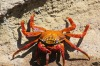 Huge, colourful crabs can be spotted on the rocks all over the islands.