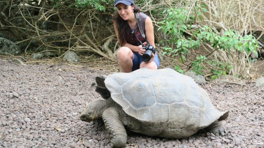 A giant tortoise on the Galapagos Islands.