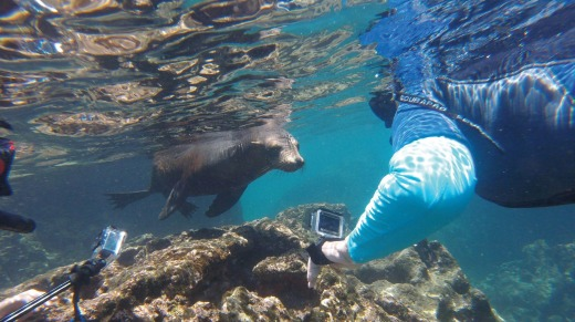 Snorkelling with sea lions off Bartolome Island.
