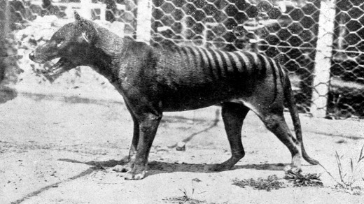 The last known Tasmanian Tiger, or Thylacine, died at the zoo in 1936.