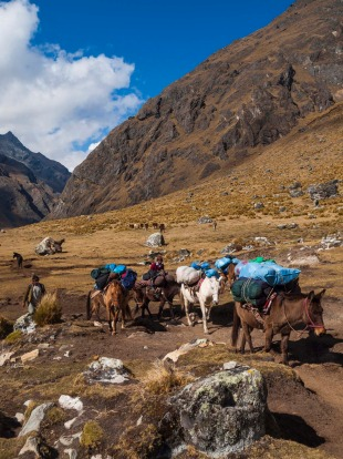 Pack horses are driven through a mountain pass on the Salcantay Trail, Peru. This trail is a popular trekking route for ...