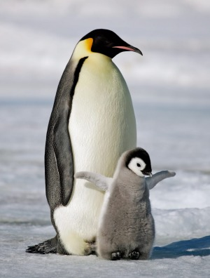 Nothing can prepare you for your first penguin sighting.