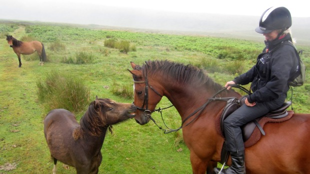 A wild pony says hello on Dartmoor.