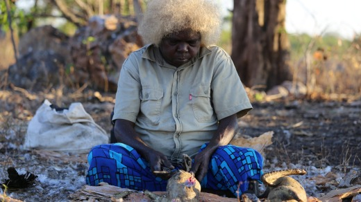 Patsy, of the  Gunavidji people, prepares a magpie goose for dinner.