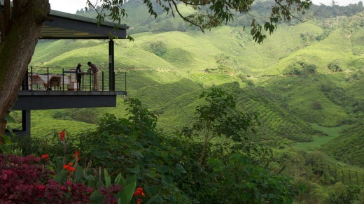 The Highlands Tea Plantation in Malaysia.