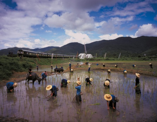 Eastern & Oriental Express train passes workers in a rice field.