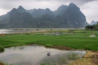 Karst mountains rise up spectacularly from the Red river delta in the Nin Binh province of Vietnam.