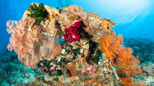 A bouquet of marine life.