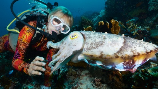 Up close with a cuttlefish.