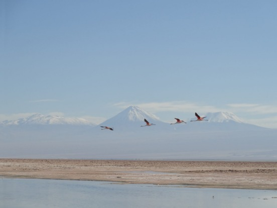 I took this photo in the Atacama Desert, Chile, in January this year. It shows a group of flamingos flying high above ...